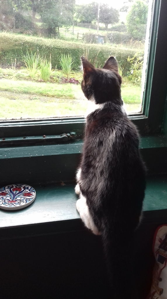 Black and white cat sitting on a windowsill and looking out into a garden.