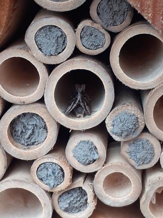 Bee Hotel Moth