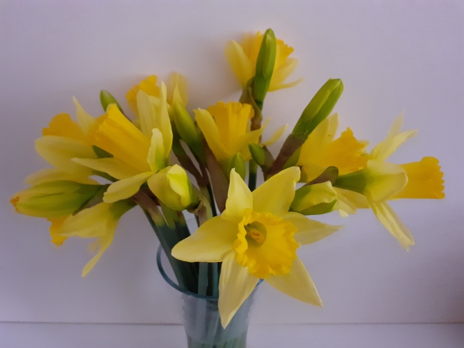 The image shows a vase of yellow daffodils.