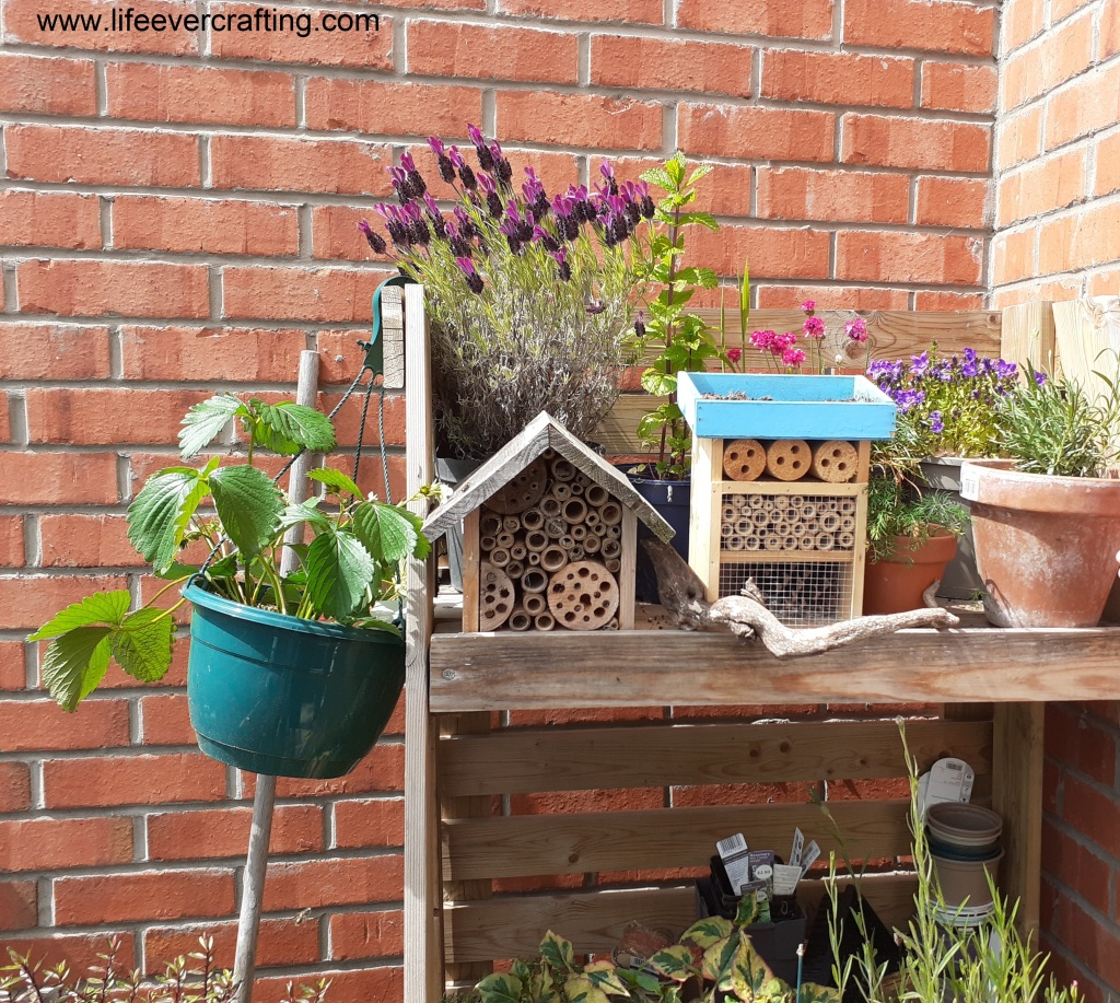 The image shows a garden shelf with two bee hotels and various flowering plants. There is a strawberry plant in a hanging pot on the end of the shelf.