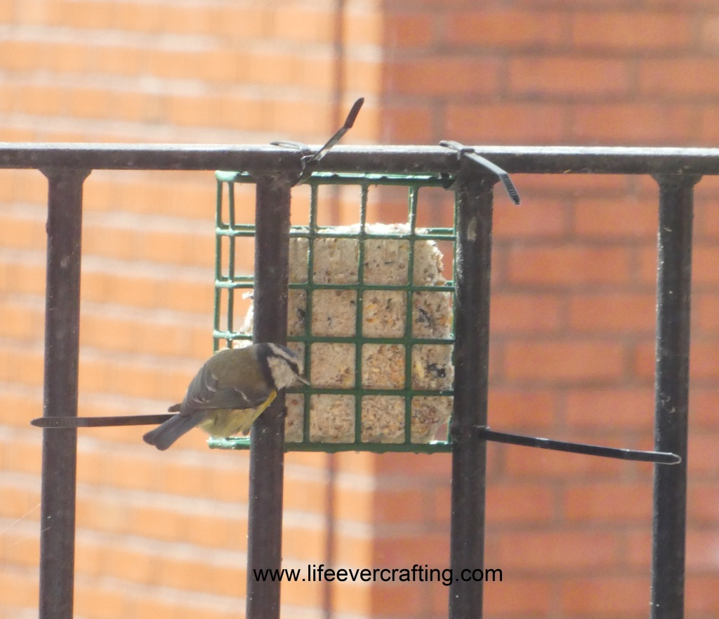 The image shows a coal tit fledgling on a bird feeder.