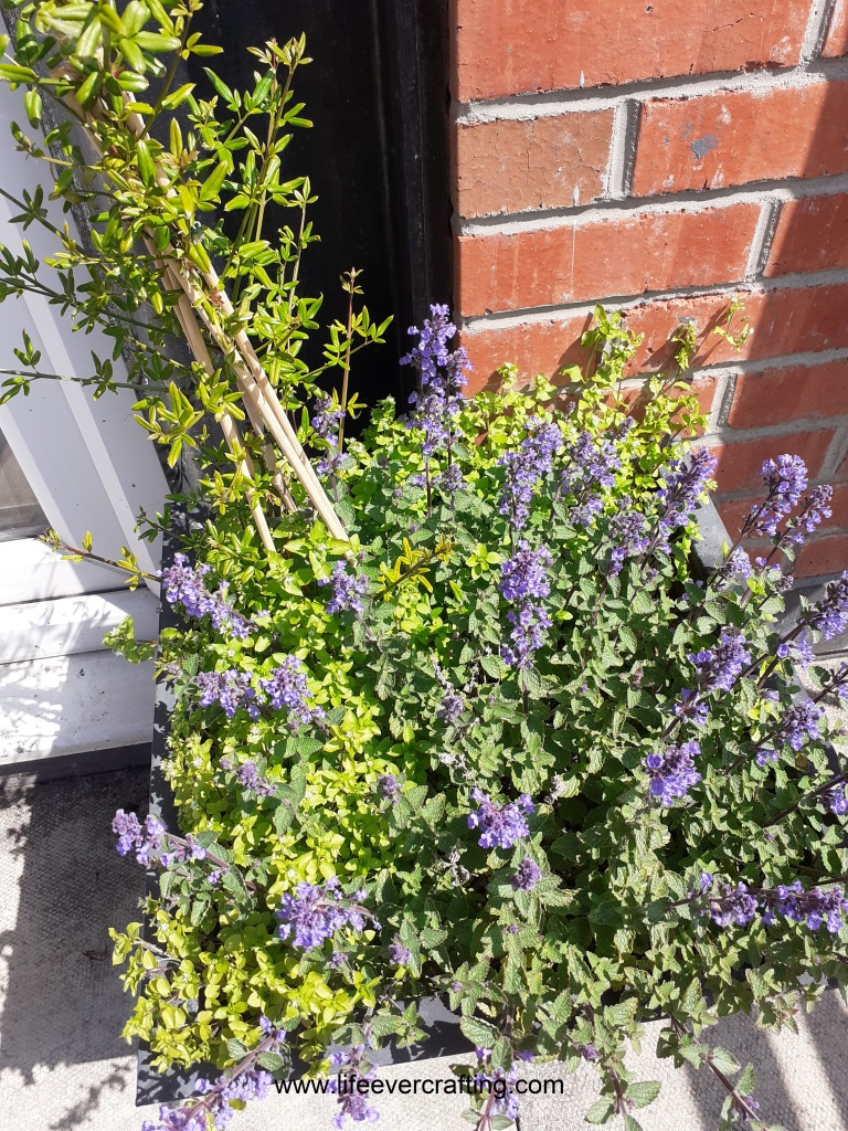 The image shows a plant-pot with purple flowers in it.